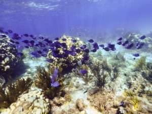 Grand Cayman things to know - snorkeling